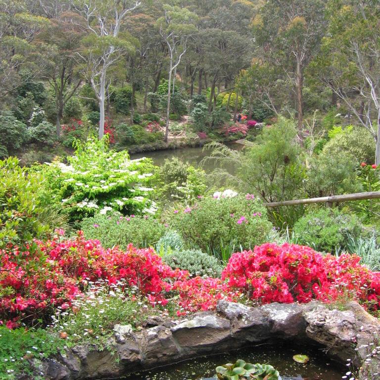 rhododnedron garden 768x1024